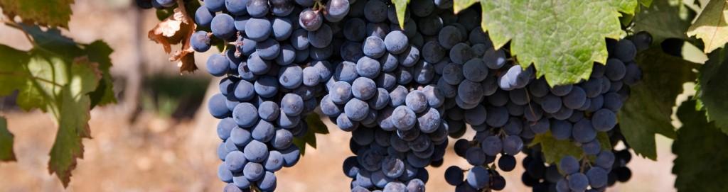 slide-grapes